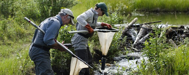 Researchers net aquatic macroinvertebrates in Horseshoe Lake, Denali National Park and Preserve