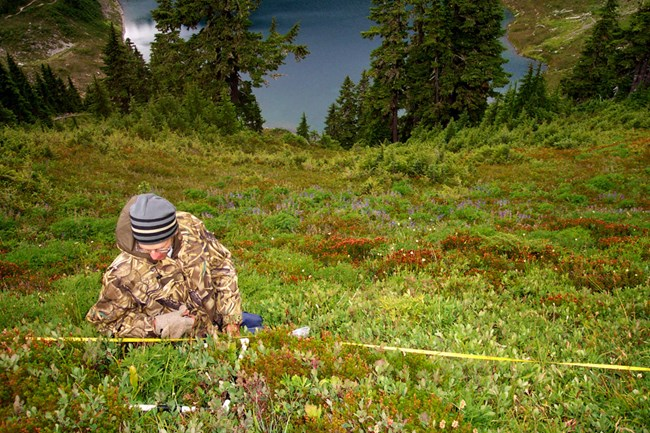 Researcher identifying vegetation high above a lake in Olympic National Park