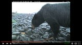 video screen shot--bear on beach