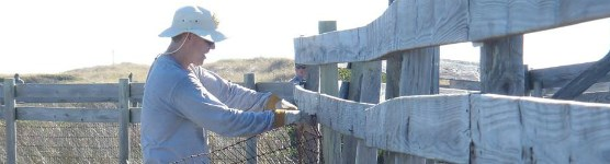 Park staff members mend fences on the barrier islands