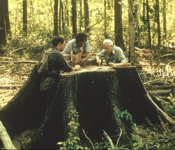 Researchers meet over a cut tree stump to discuss next steps