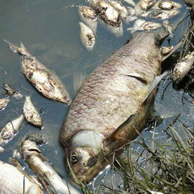 Darling River Fish Death Explainer