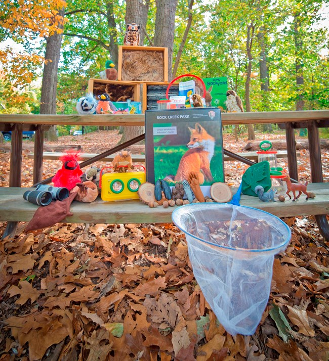 The Urban Wildlife kit unpacked on a picnic table