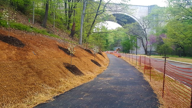 Sapling trees next to resurfaced multi-use trail next to road in Rock Creek Park