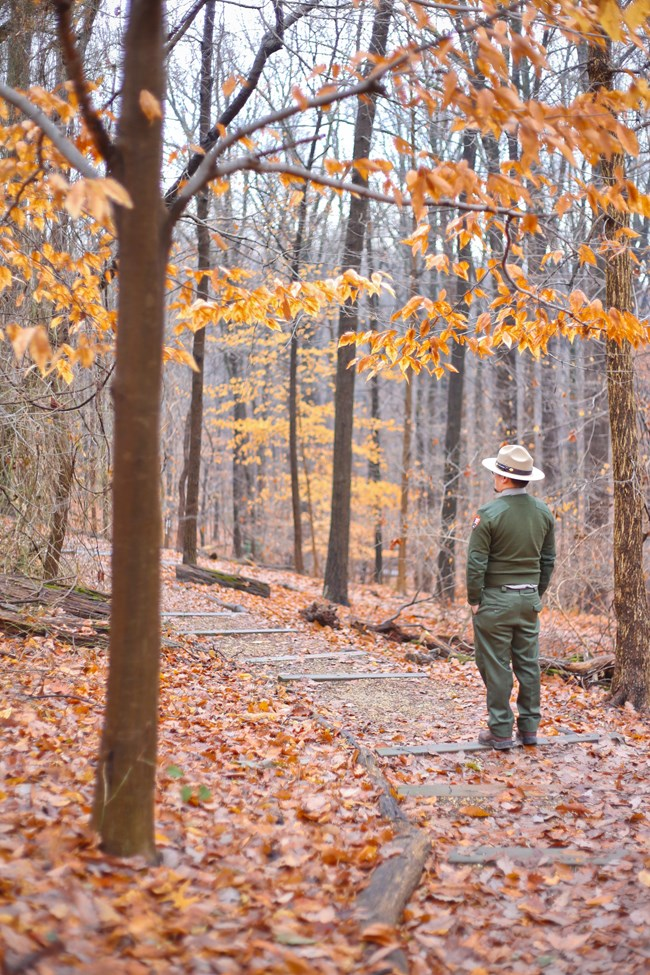 A park ranger hikes with autumn leaves around.