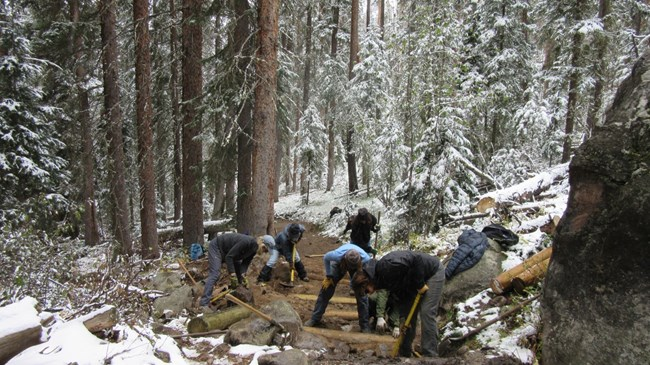 Five trail workers use hand tools to repair a trail through snow-covered trees