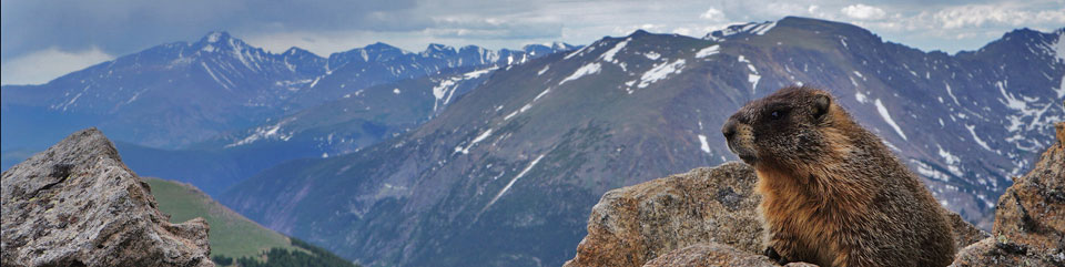 A marmot enjoying the view of the high peaks.