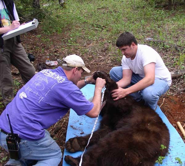 a photo of bear researchers