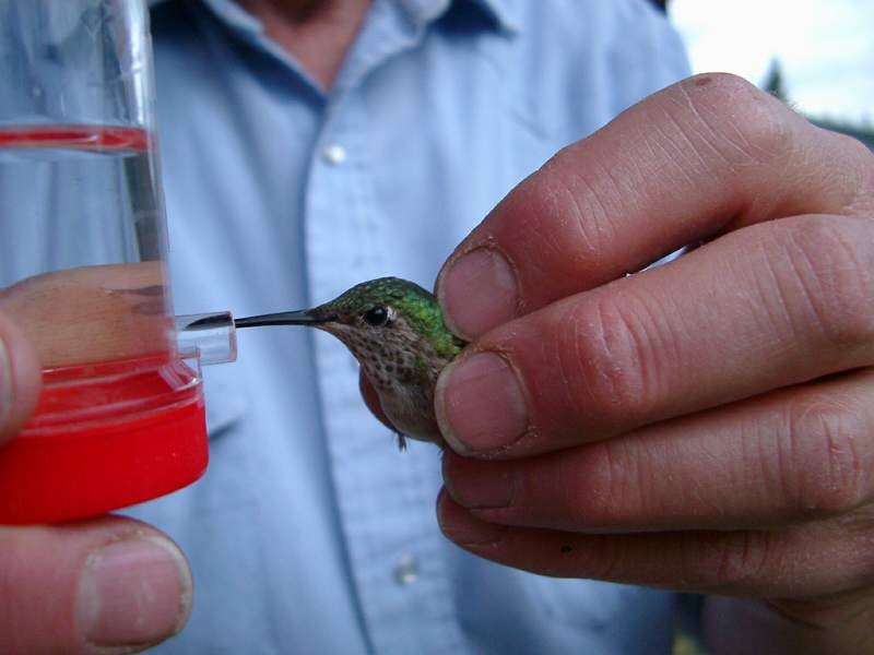 a photo of a hummingbird being fed