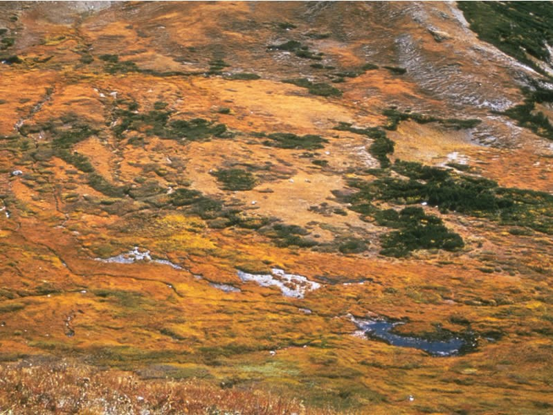 a photo of fall tundra colors