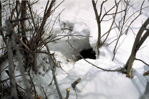 a photo of a beaver hole