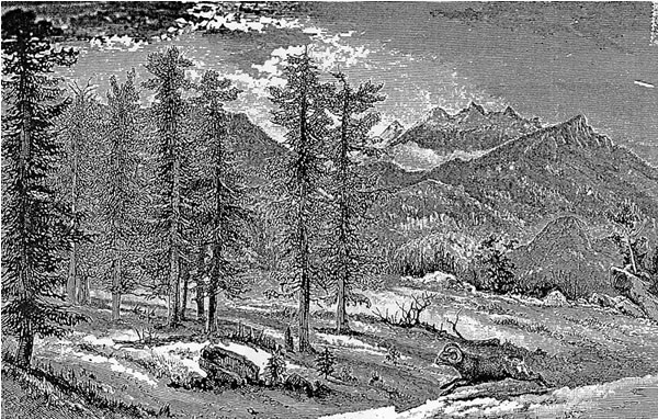 a sketch of Estes Valley by Bierstadt