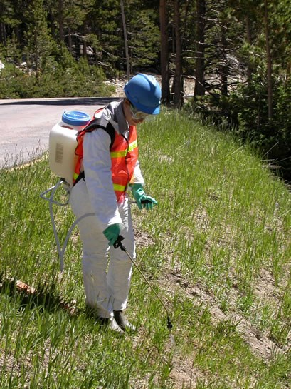 a photo of natural compounds being used to control noxious weeds