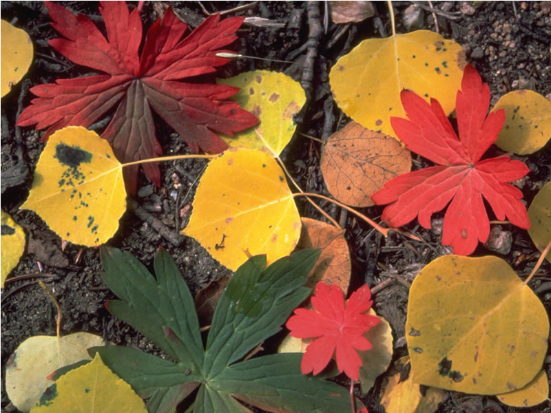 a photo of fall leaves