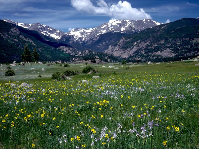 a photo of mountain iris and golden banner