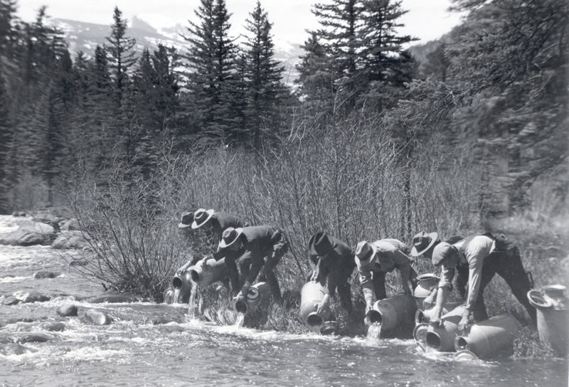 an historic photo of stocking  Glacier Creek with nonnative fish