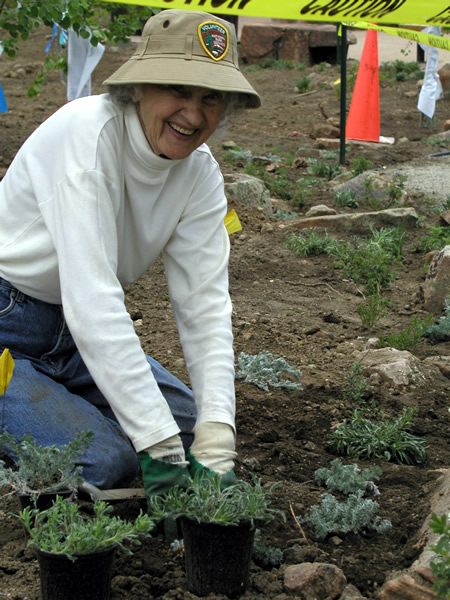 a photo of a revegetation volunteer