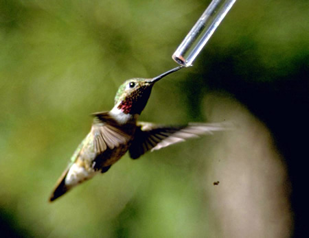 a photo of a hummingbird