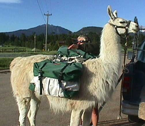 a photo of a working lllama