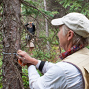 Researchers measure the diameter and height of trees