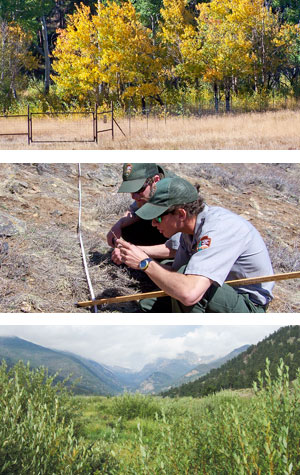Elk fences surround aspen trees, park staff measure vegetation, horseshoe park willows