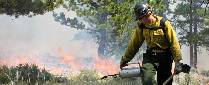 Firefighter with drip torch for a prescribed burn