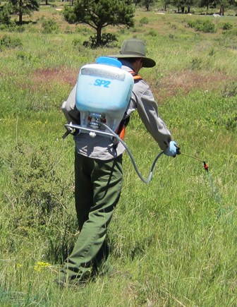 Park employee applying herbicide with a backpack sprayer to control exotic/invasive plants.