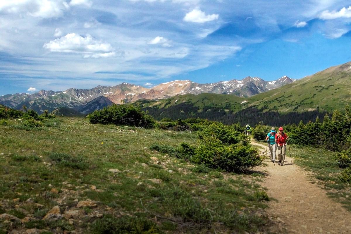 Cute Trees Alpine Tundra Ecosystem Rocky Mountain National Park U