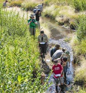 Students look for life in a stream