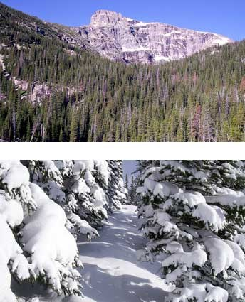 Spruce Forest in summer and winter