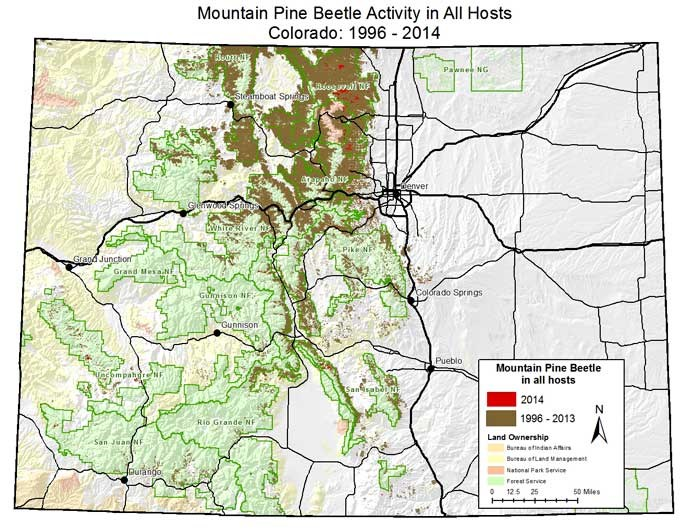 Mountain pine beetle map of Colorado