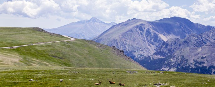 Mountains surround elk lying on the tundra
