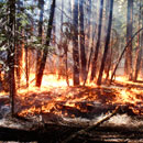 A ground fire in a forest