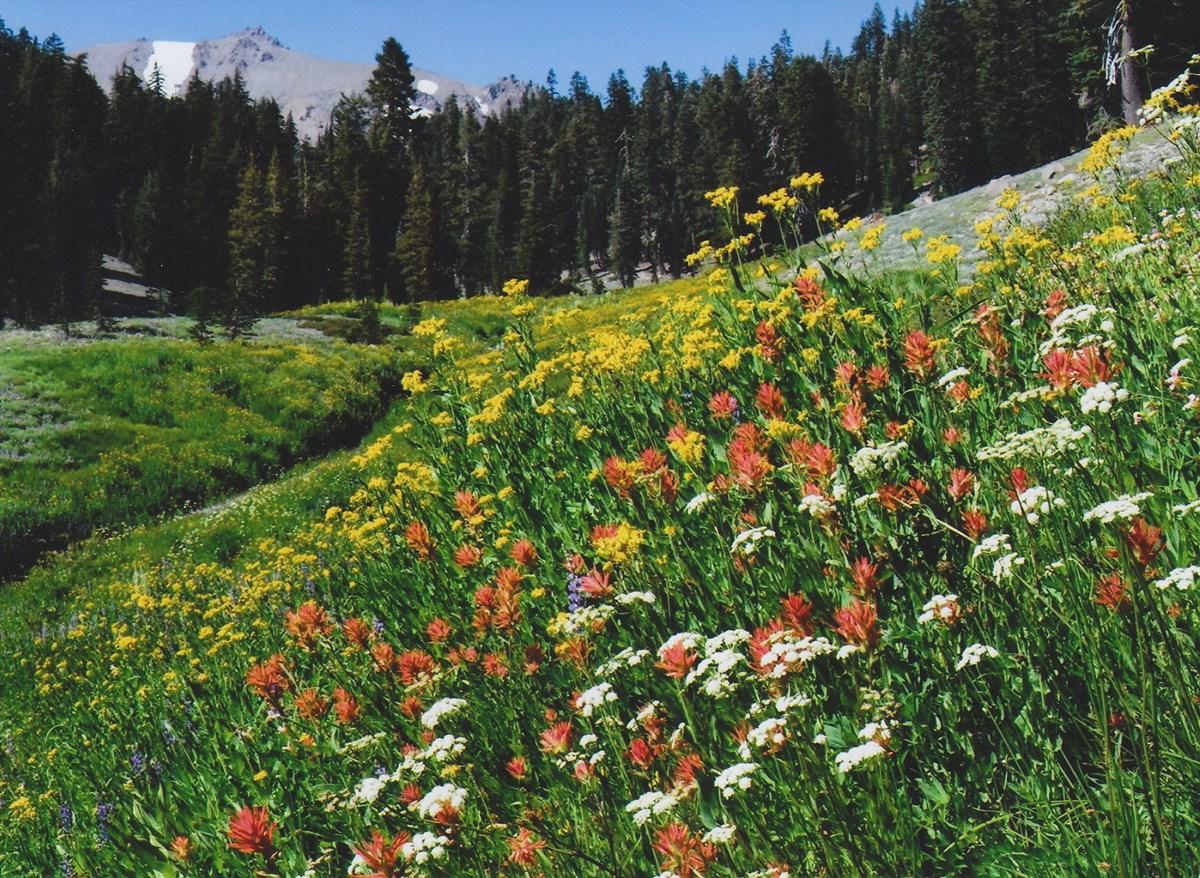 Plants Rocky Mountain National Park Us National Park Service