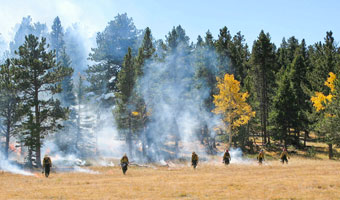 Firefighters igniting a prescribed burn in a meadow