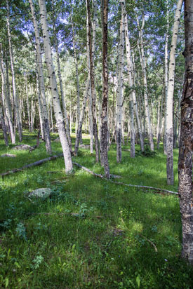 Deciduous Trees - Rocky Mountain National Park (U.S ...