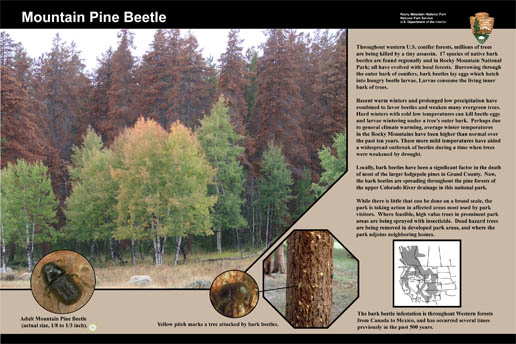 Photo pine beetle wayside exhibit