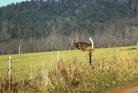 a photo of white-tailed deer