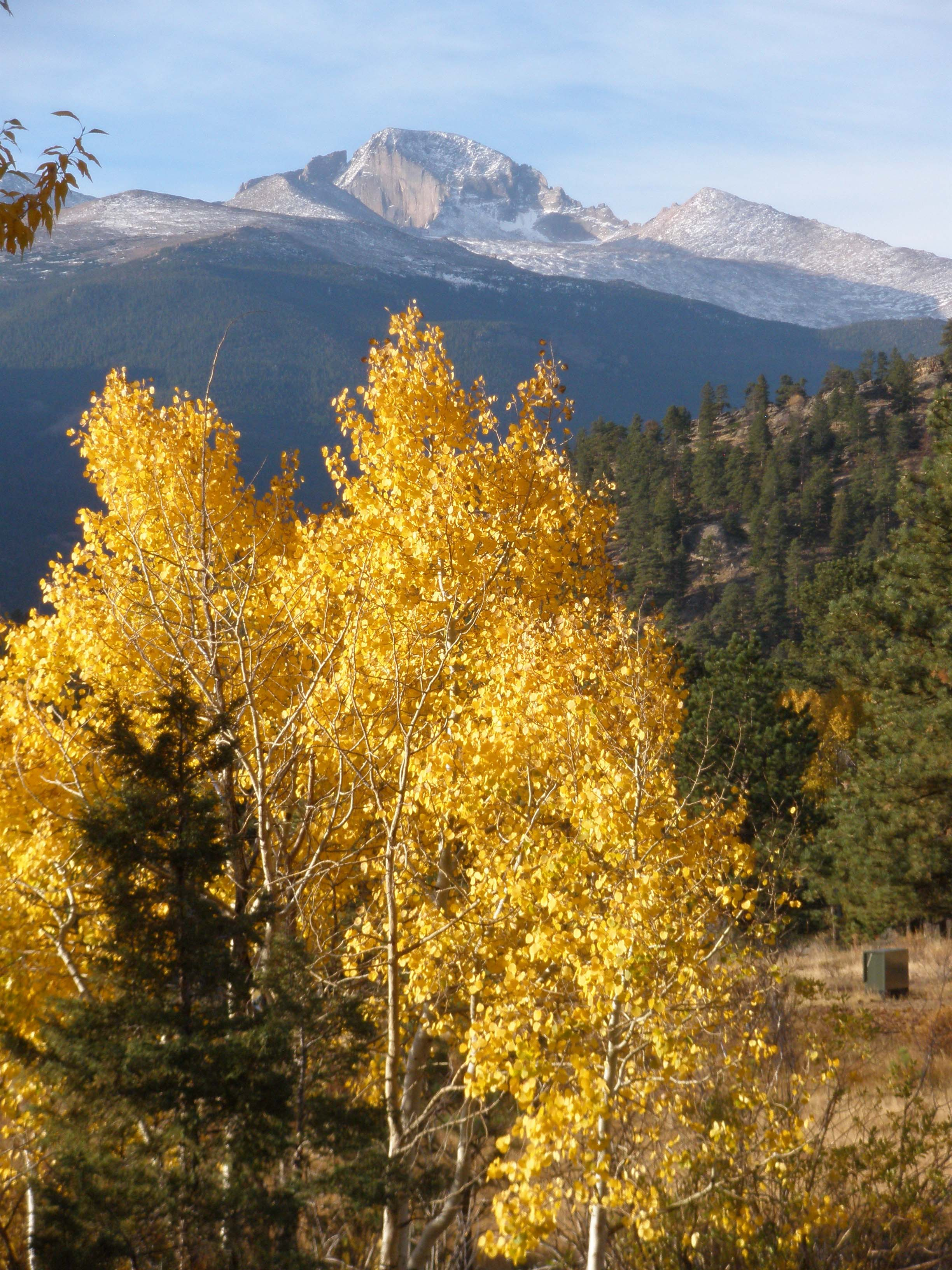 Longs Peak in distance with fall colors.
