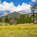 Wildflower meadow with mountain backdrop