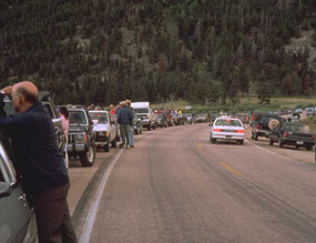a photo of the an elk jam
