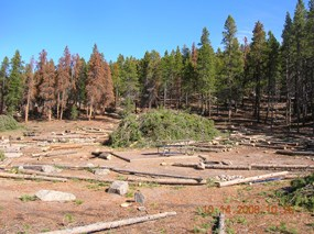 Photo hazard tree removal at Timber Creek Campground