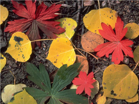 a photo of leaves in fall colors
