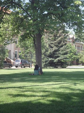 Photo student sitting under tree at University of Colorado