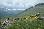 Photo alpine tundra and link to Terry's Tidbits page.