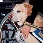 Service Dog credit CCI