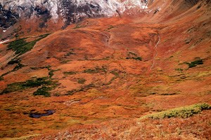 Alpine tundra in autumn