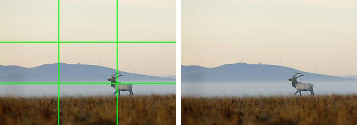 A photo of an elk is overlayed with a green grid showing the elk's location in the lower third of the photo