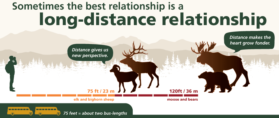 A graphic showing safe viewing distances for elk and sheep (75 feet) and moose and bears (120 feet).