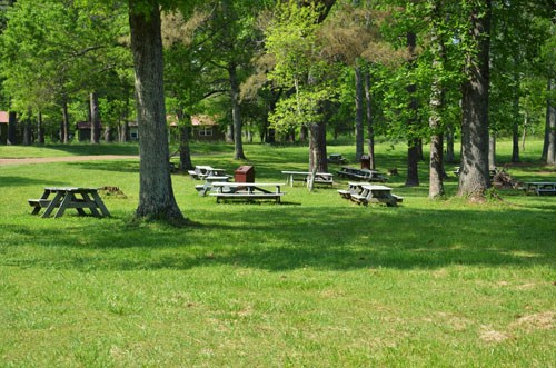 Several picnic benches sit on grass with trees in between them.